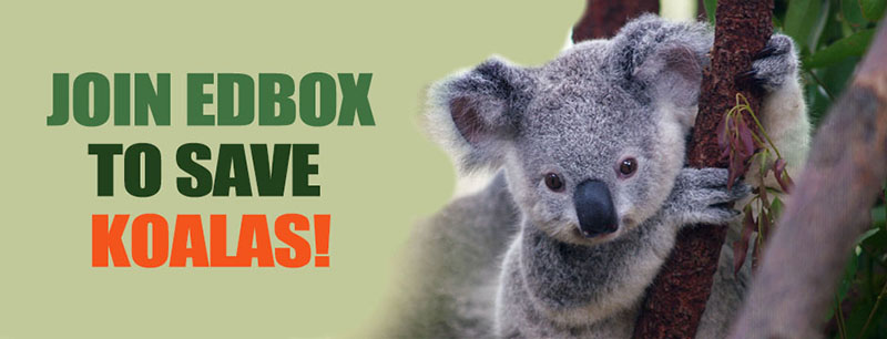 edbox_koalas_800